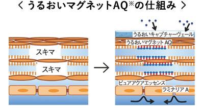 すき間を修復する成分が肌の保湿