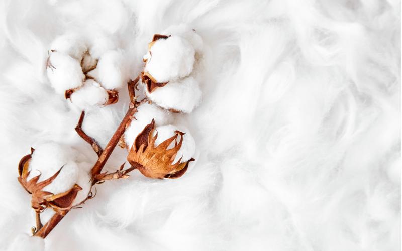 4.「木綿」