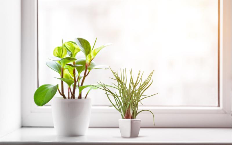 1.観葉植物