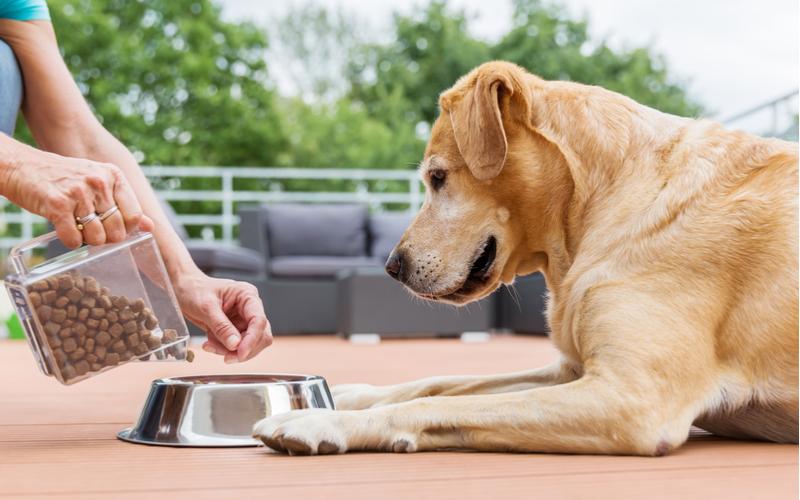 飼い犬など、ペットにえさをやる