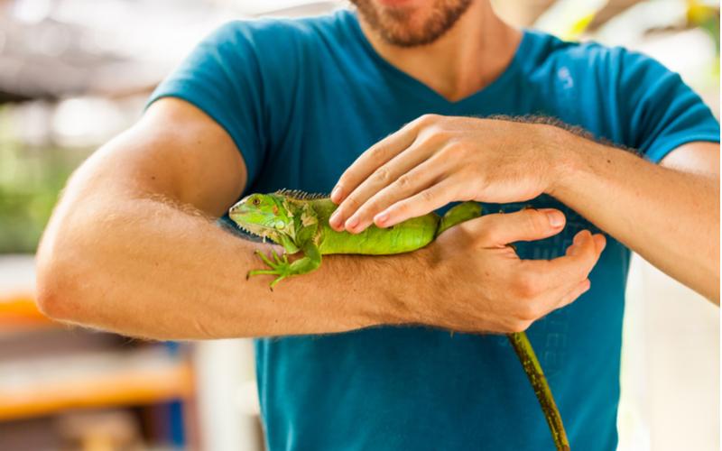 「彼女と同棲している家で爬虫類