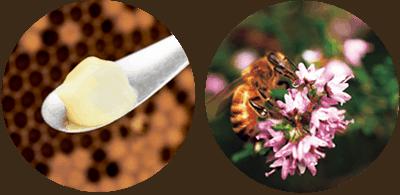 ロイヤルゼリーとハチミツ
