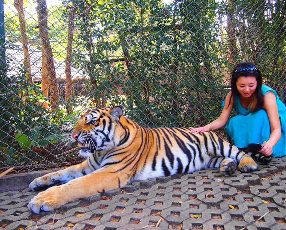 ちなみにトラが好きなのはダンボ
