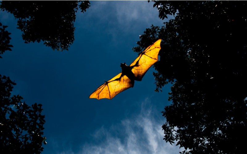 主に夜間、鳥のように飛び回って