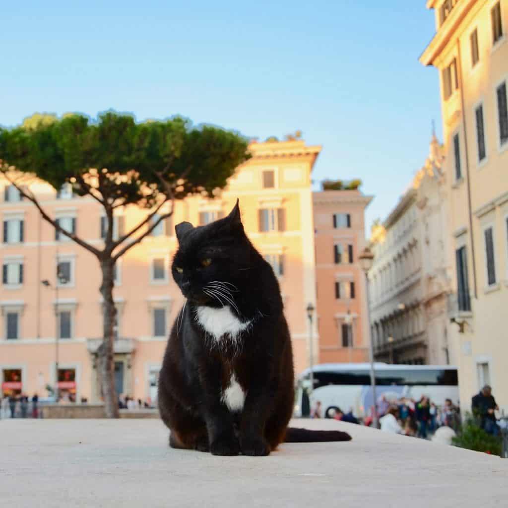 旅作家が推薦!「世界的な遺跡で猫とふれあう」【ローマ編】|いつか行きたいアラサー女子旅