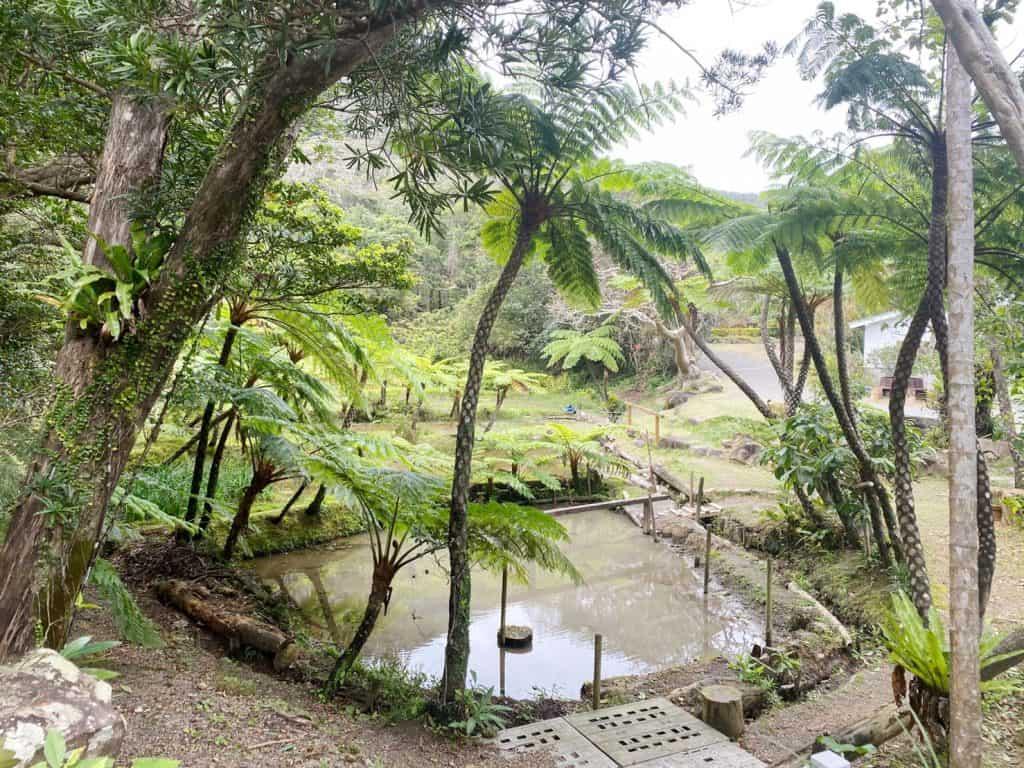 奄美大島諸島は、鹿児島と沖縄の