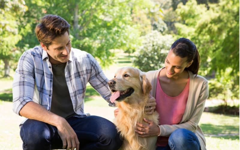 愛犬家のコミュニティ