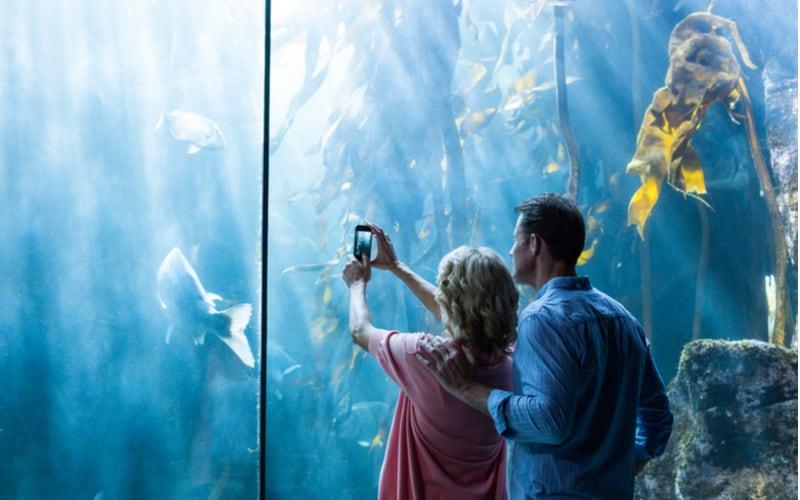 1.水族館