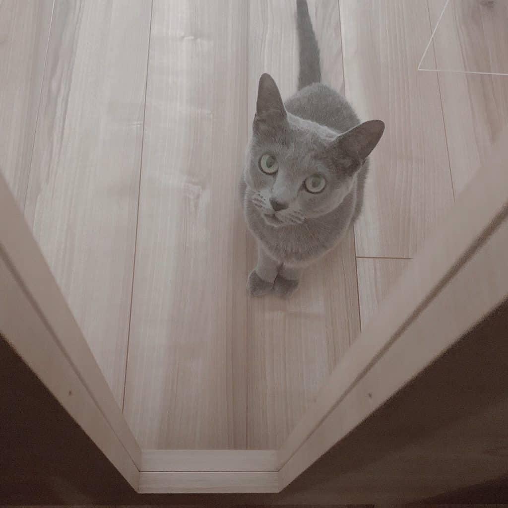 オシャレな人の猫ぐらしが見たい!【スタイリスト・児嶋さんの場合】