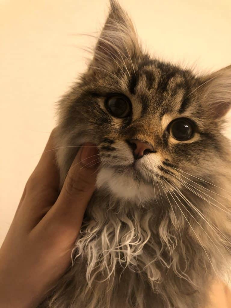 おしゃれな人の猫ぐらしが見たい!【編集・陣内の場合】
