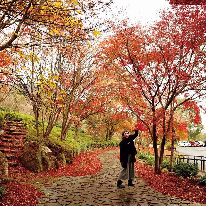 茶の文化館の周囲はとくに紅葉が見事でした!